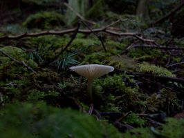 little white mushroom3 by owlbird