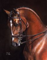 Dressage Horse by ManiaAdun