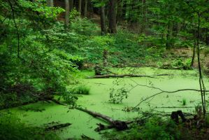 green swamp by Wilithin