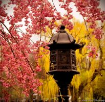 Glory Of Spring by MyLifeThroughTheLens