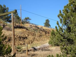 Big Horned Sheep of Colorado 2 by Collidoscope