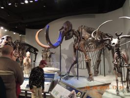 wooly mammoth by tabby25