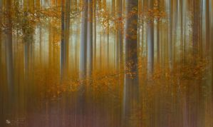 Song of Aspen by ildiko-neer