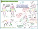 Werewolf Anthro Tutorial pt. 1 by Draikairion