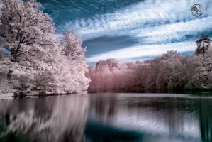 Moving Reflections by Creative--Dragon