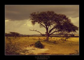 savanna by dethita