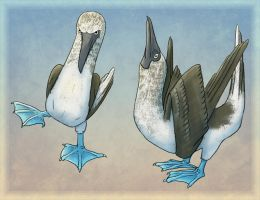 Blue-footed boobies by RiverRaven