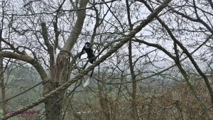 colobus monkey by frogslave69