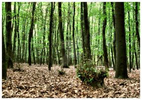 Day at Holten: Holten Forest by SubArcticSheep