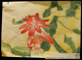 cactus flower by YummyBiscuit