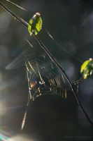 Spider's World 3 by rici66