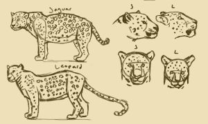 Jaguar Leopard comparison by Tianithen