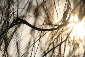 The light behind the branches by yeahBISH