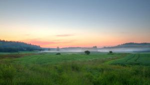 Early summer morning by Antz0