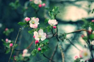 Apple tree by PointsOfHysteria