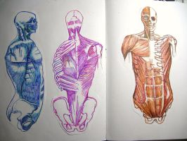 human bodies by angieluvsyou