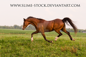 hackney pony extended trot by slime-stock