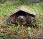 Turtle by starfire24