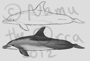 Bottlenose dolphin markings by namu-the-orca
