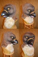 Ajax Red Tailed Hawk Head by temperance