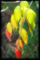 Rainbow Leaves by Xinahs