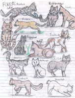 Warriors cats sketch dump 2 by puddlecat1