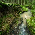 little creek by indojo