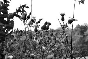 Thistles and Weeds by WickedOwl514