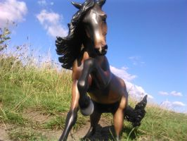 my shoes were made for walkin by breyer-awesomeness