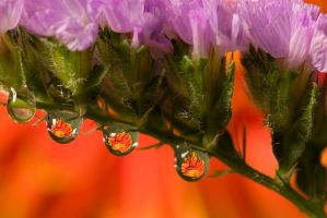 Colourful droplets by AngiWallace