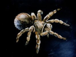spider :) by o0WhiteRaven0o