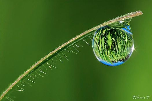 A Drop of Grass by tamirbibi