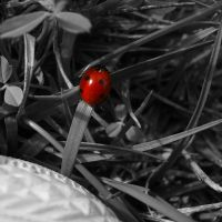 red Life by LimpidD