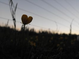 Buttercup by frayzoid