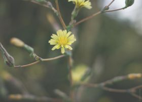 Little Yellow by GRfotography