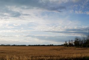 Field and Sky by ElevenSpecial