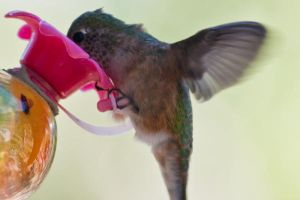 hungry hummer by depshado