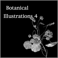 Botanical Illustrations 4 by butnotquite