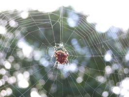 Spider in the sky I by Sid-Jay