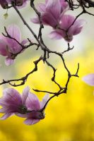 Spring Blossom 6 by Art-Photo