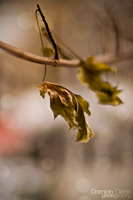 winter leaves by DoubbleD