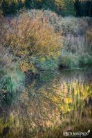 Willow Reflection HDR by mjohanson