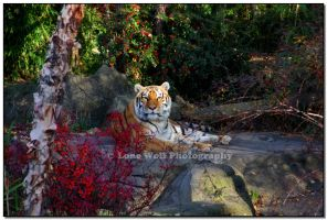 Royal Garden by LoneWolfPhotography