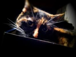 Cat in a Box by surlana