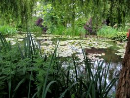 Monet's water garden by April-Mo
