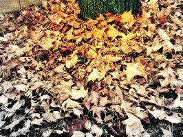 Dry leaves by lalliphotography