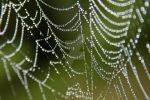 Wet web by Keith-Killer