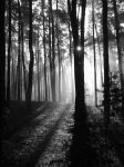 Magical Foggy Forest 1 by FilipR8
