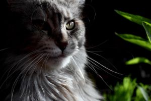 Feline Eyes by Alienmainen