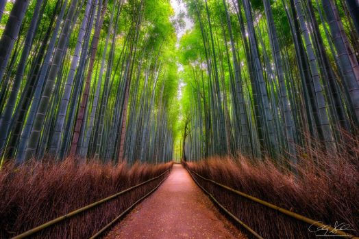Walk the Path by AndrewShoemaker